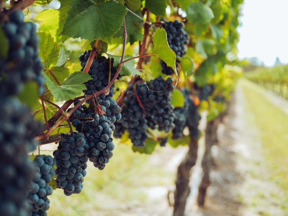 Denominación de Origen Calificada Rioja