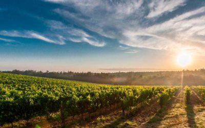 El vino en España, historia y situación actual