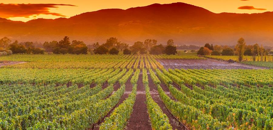 Historia del vino España