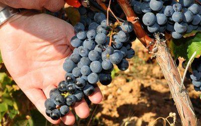 Aclarando ideas: vinos de uvas maduras con color, no son los vinos denostados con mucha extracción